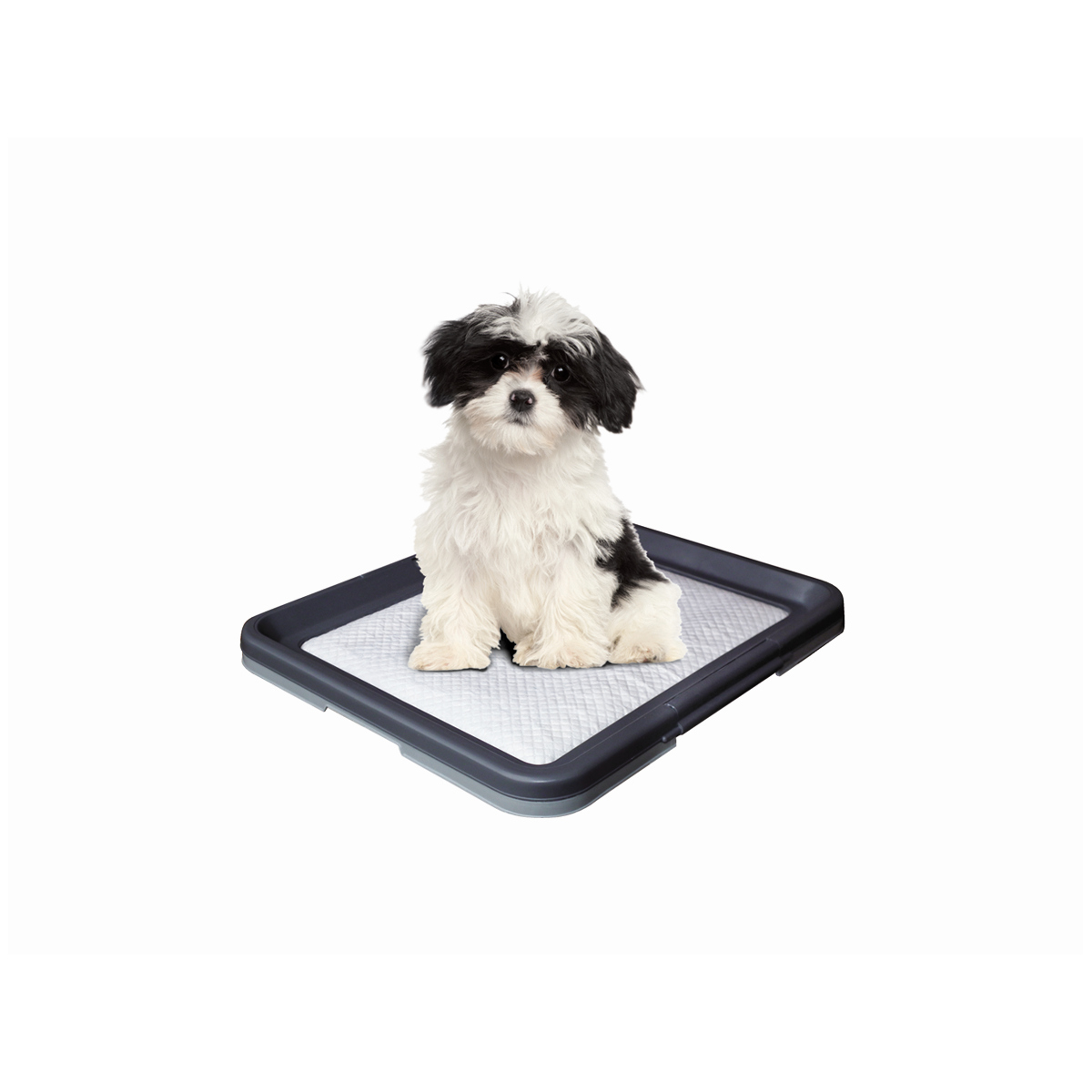 NB PUPPY TRAININGSET SMALL 00001
