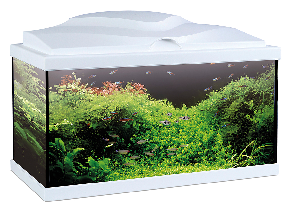 ciano nexus 25 aquarium met led filter 34 x29 x38 cm ciano. Black Bedroom Furniture Sets. Home Design Ideas