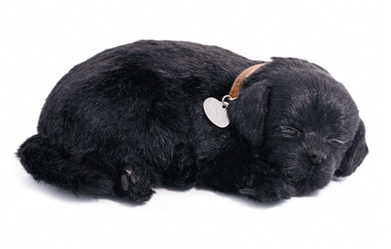 Soft black labrador zwart